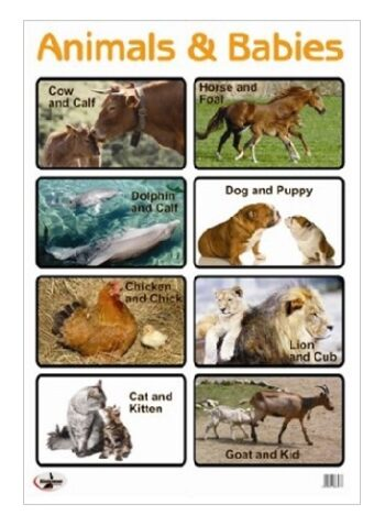 Cute Animals And Their Babies Poster