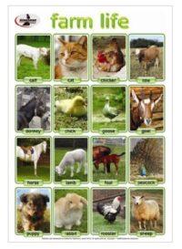 Farm Life - Fun Educational Poster