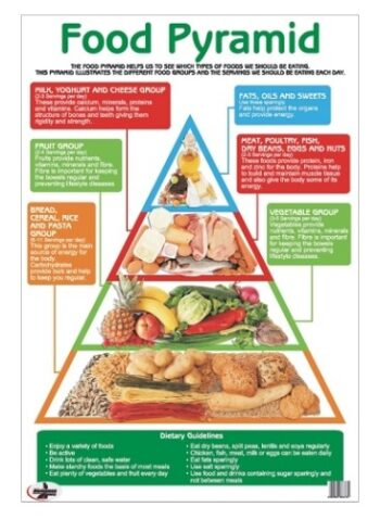 Food Pyramid Write and Wipe Educational Poster