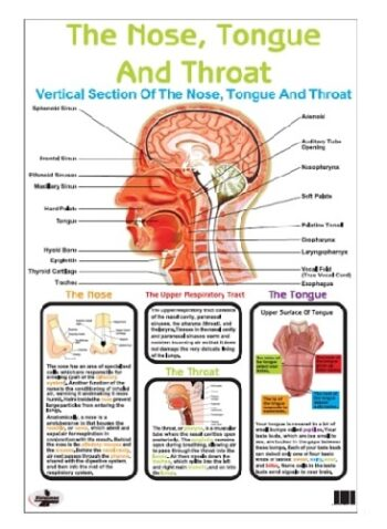 Nose, Tongue and Throat Poster